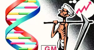 patent laws and GMO