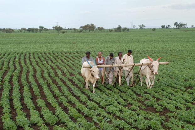 agricultural bills